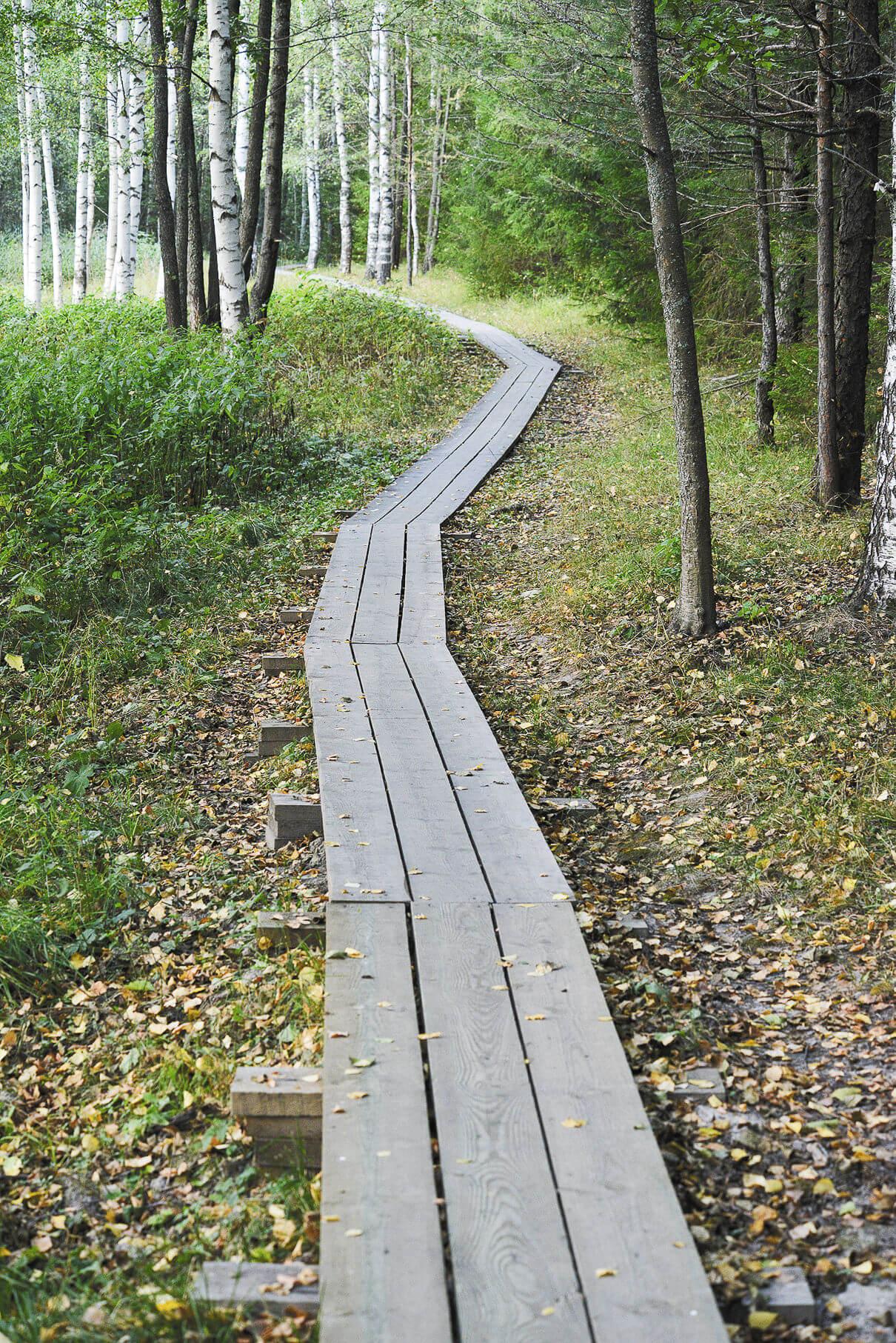 Тропинка вокруг озера Светлояр недолга — всего полтора километра